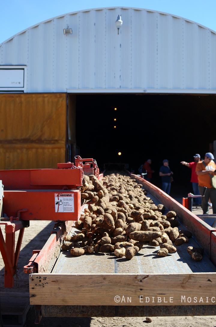 Idaho Potato Tour 5