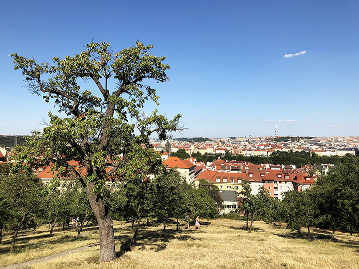 Petrin Hill View Showing Red Roofs in Prague