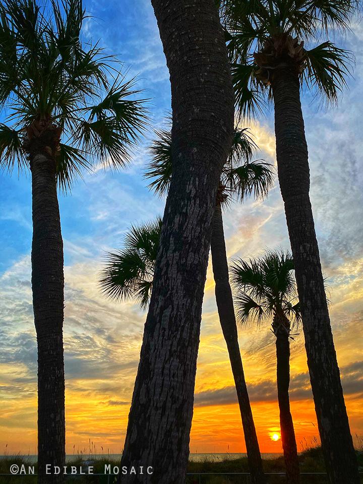 Palm Trees at Redington Beach