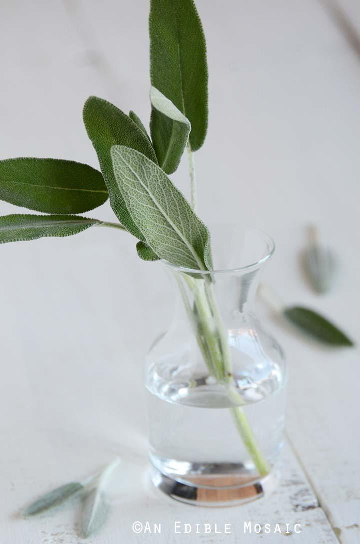 Fresh Sage in Glass Vase